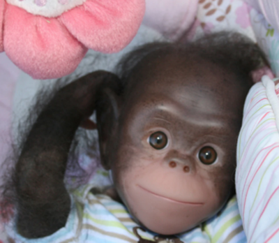 """Painted Rooted Chaz Chimpanzee (17"""" Kit)"""