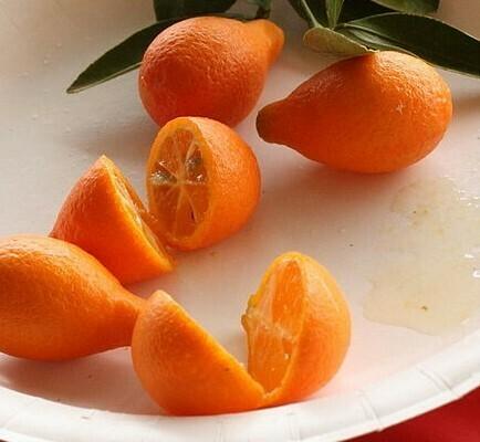 Nippon Orangequat