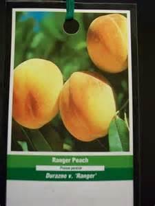 Ranger Peach