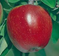 Winesap Heirloom Apple