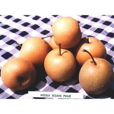 Hosui Asian Pear