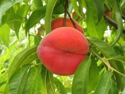Tex-King Peach