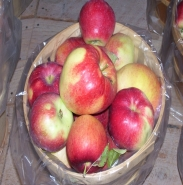Mollies Delicious Apple