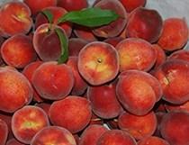 Harvester Peach
