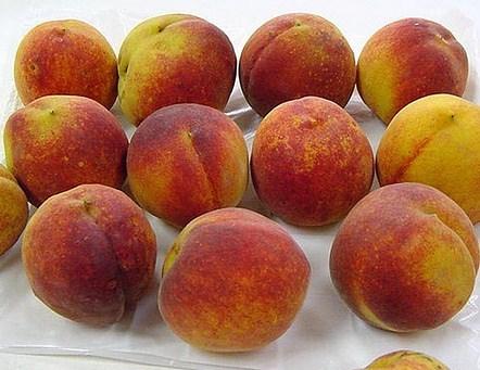 Rio Grande Peach