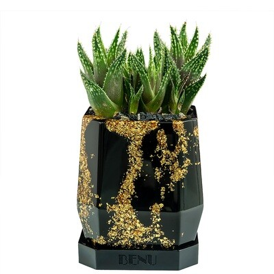 Aztec Gold | Succulent Pot