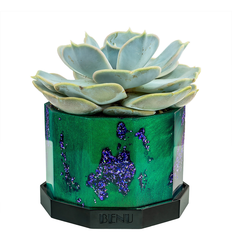 Enchanted Forest | Succulent Pot