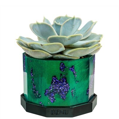 Enchanted Forest | Succulent Pot