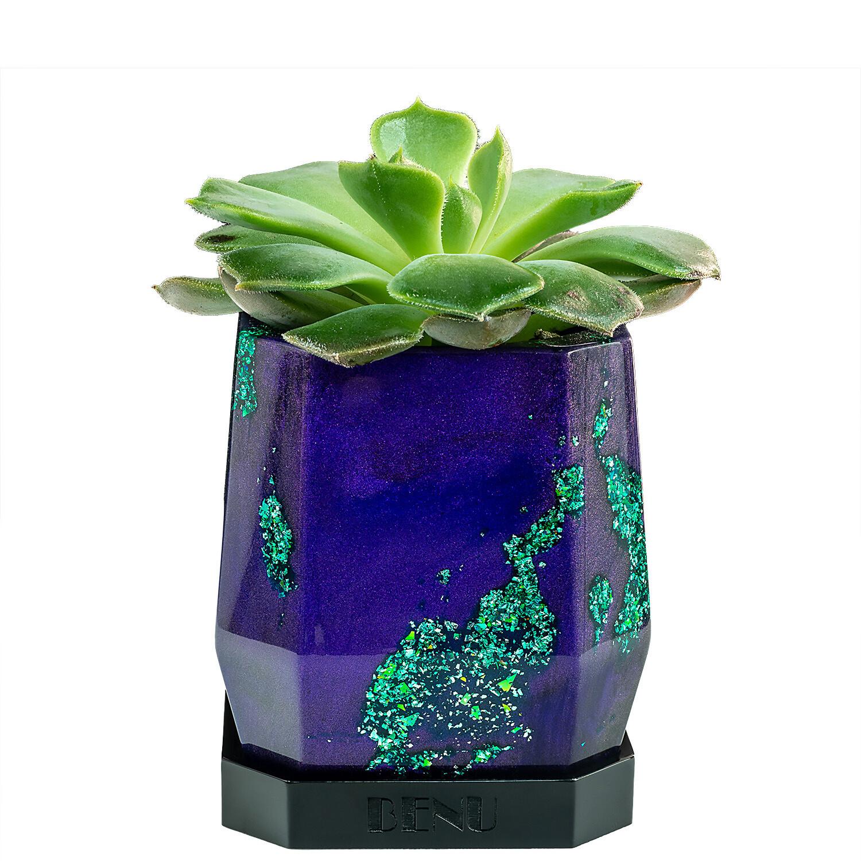 Mystery   Succulent Pot
