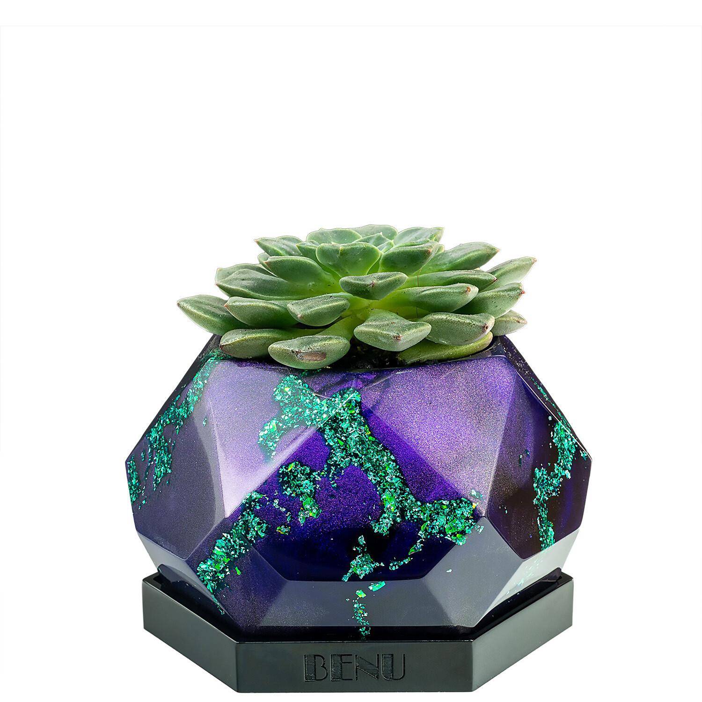 Mystery | Succulent Pot