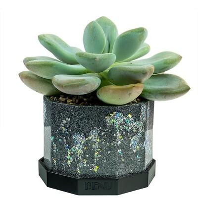 Stardust | Succulent Pot