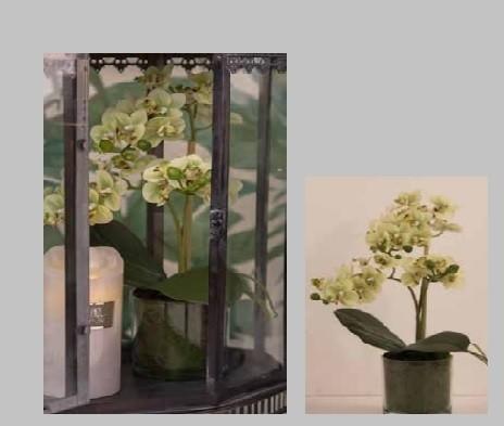 Dekorationsblomster - Orkide 3-grenet-sart gul i glas potte. H37 cm