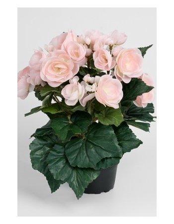 Dekorationsblomster - Pegonia i potte. H28 cm