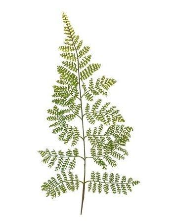 Dekorationsblade - Adiantum. H60 cm