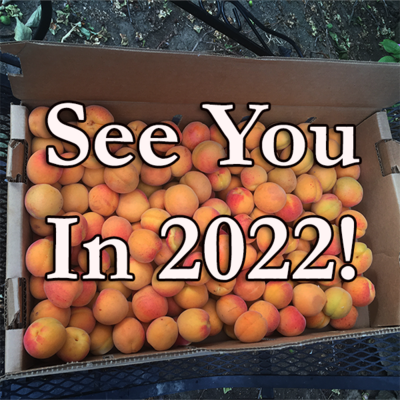 Blenheim Apricots - For Pick Up by Appointment Only