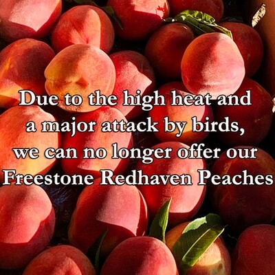 Freestone Redhaven Peaches