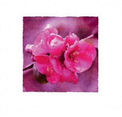 Crab Apple Blossom Thank You Pack
