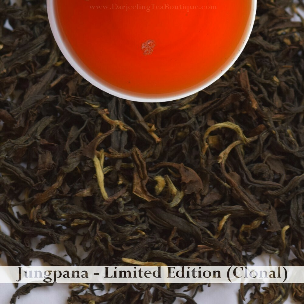 WHOLESALE PACK | JUNGPANA CLONAL   - Darjeeling Autumn Flush Tea 2019  (1Kg / 2.2lb)