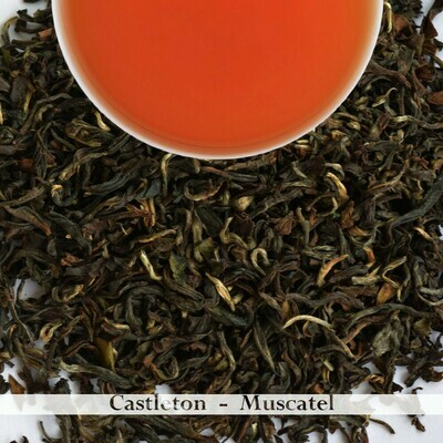 WHOLESALE PACK | CASTLETON MUSCATEL - Darjeeling 2nd Flush 2020 (750gm)