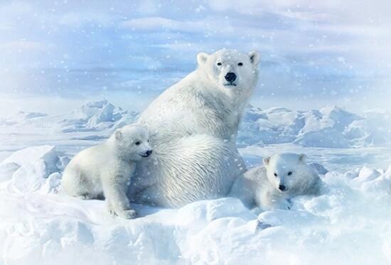 Polar Bear Family - Hoffman Fabrics Digital PANEL