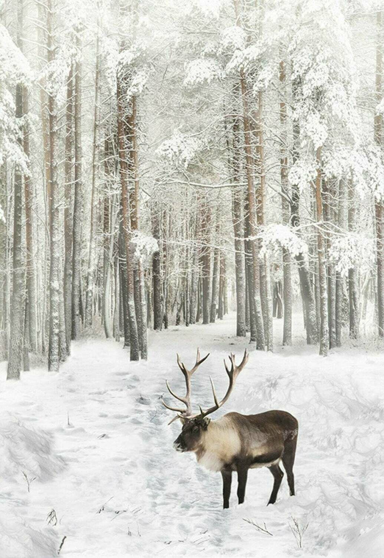 Call of the Wild Caribou - Hoffman Fabrics - PANEL