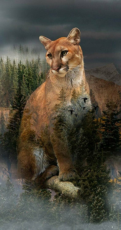 Call of the Wild Mountain Lion - Hoffman Fabrics - PANEL