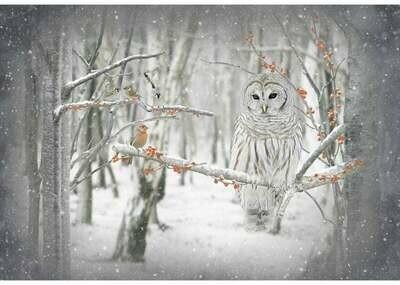 Call of the Wild Birch Owl - Hoffman Fabrics - PANEL