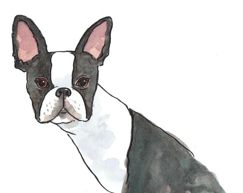 Boston Terrier Watercolour 210x 150 mm Free P&P