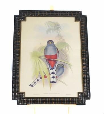 Bombay Co. John Gould Trogon Ebony Framed Lithograph