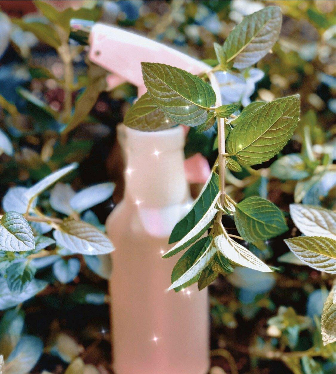 Gaia's Plasma Sage Cleaning Spray