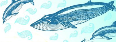 Dolphin Consciousness Workshop
