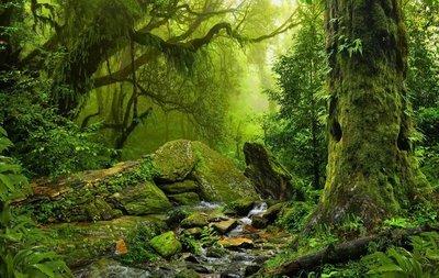 Nature Spirit 21.12.2012 Retreat - Fortingall