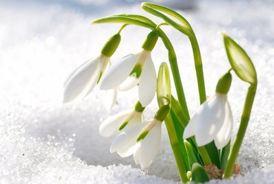 Imbolc Snowdrop Fairies
