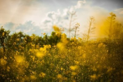 Spring Equinox Glastonbury Activations & Meditations