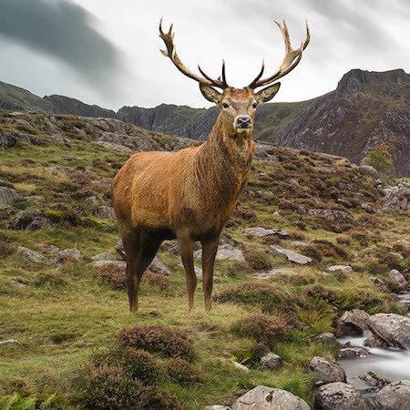 Samhain Celtic Spirit Animal Workshop