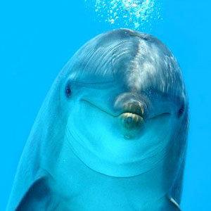 Lemurian Dolphin Workshop