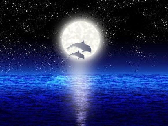 Dolphin Full Moon Workshop