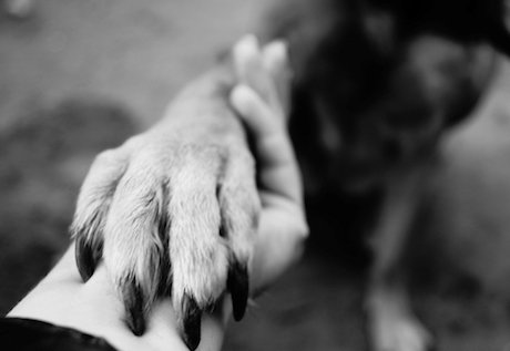 One to One Departed Animal Communication Session
