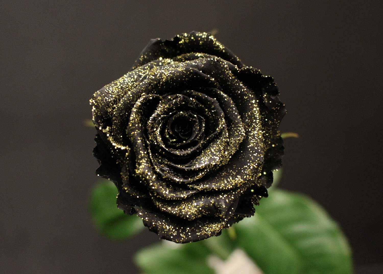 Rose Noire Or