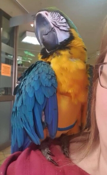 Flyper Bird Diaper Size 14