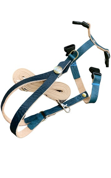 SIZE 10  LEATHERS4FEATHERS Harness Avian Leash 1100 - 1400 Green Wing Macaw / Hyacinth Macaw /  Blue and Gold over