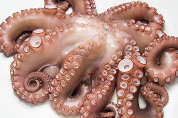 Octopus from Spain [Sushi Grade] (4.46 lbs) (Frozen) (Ships Separately - Ships Next Day)