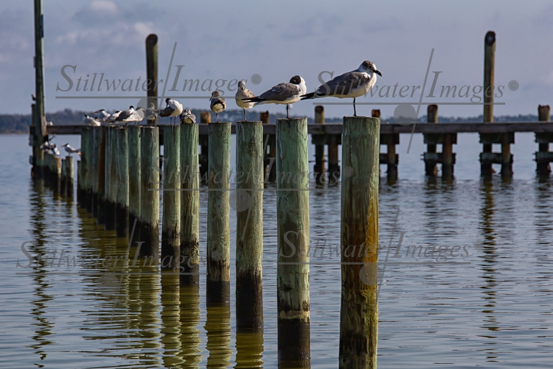 Birds of Pensacola Beach 16x24