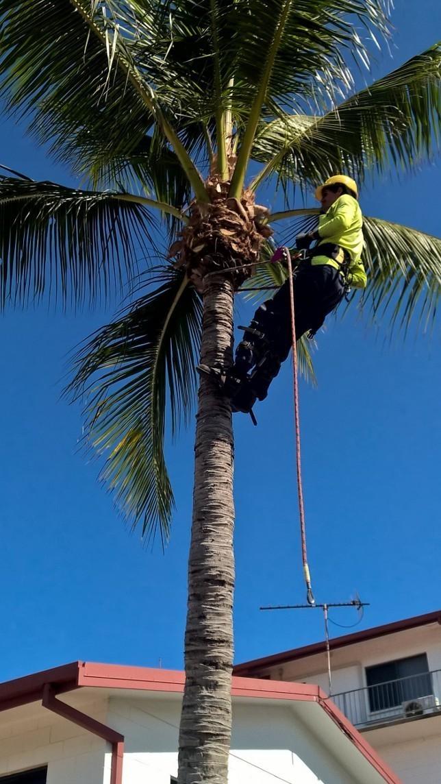 Tree De-nutting Service - per hour