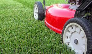 Basic Lawn Mow & Snip Service (to 850m2)