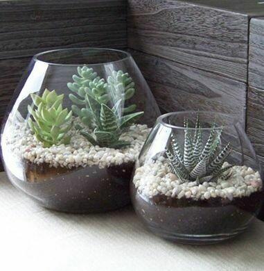 Succulent Fishbowl Terrarium