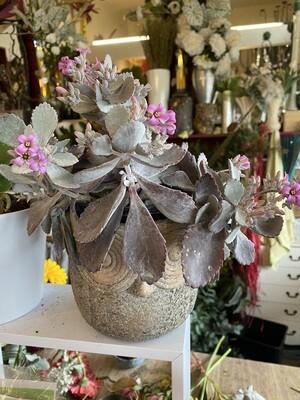 Gardeners Selection - Indoor Plant