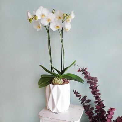 Orquídeas y suculentas