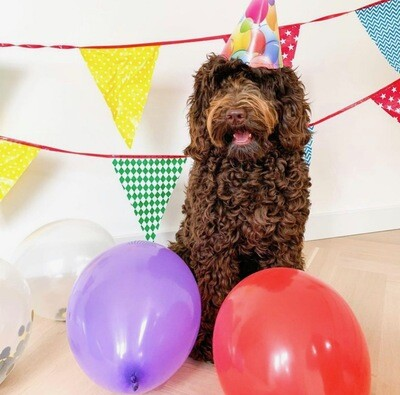 Happy Birthday Doggy Fun Pack