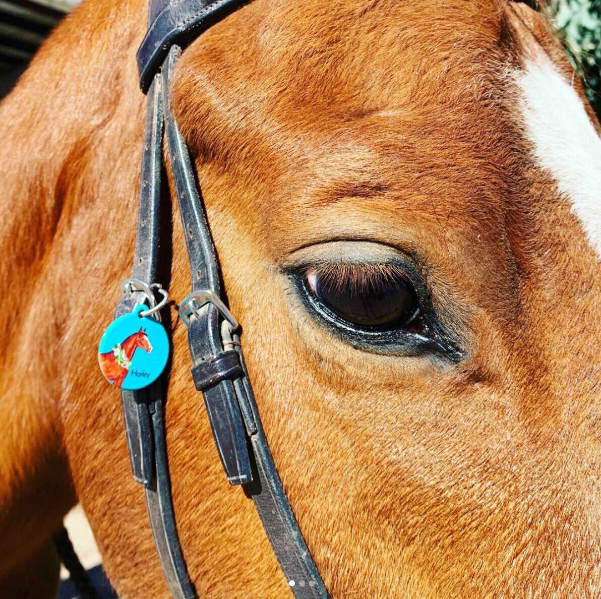 Watercolor Horse ID Tag Halter Tag Bridle Tag Saddle Tag